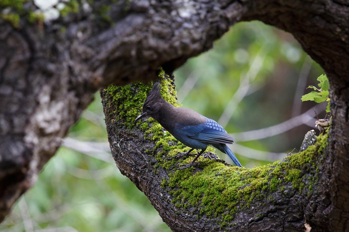 bird_jay
